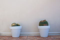 Two cacti in pots Royalty Free Stock Photography