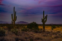 Two cactus watching the colorful sunset. Royalty Free Stock Photo