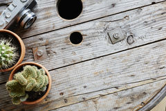 Two cactuses and analog camera on used industrial cable drum Stock Photo