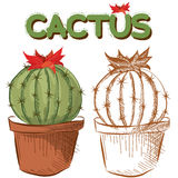 Two cactuses in a flower pot Stock Photo