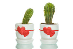 Two cactuses in flowerpots with heart shapes Royalty Free Stock Images