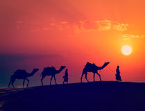 Two cameleers with camels in dunes of Thar deser Royalty Free Stock Images