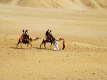 Two camels in the desert Royalty Free Stock Images