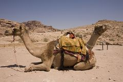 Two camels in desert near Petra Jordan. Site of the ancient Nabatean civilization Royalty Free Stock Photography