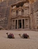 Two camels in front of the treasury. Facade in Petra Stock Photography