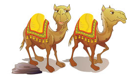 Two Camels, illustration Royalty Free Stock Photo
