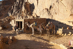 Two camels are near the home in the mountains Stock Photo