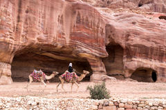 Two camels in ornate and colorful saddles with bedouins rider in front of red. UNESCO World Heritage Site, Petra Jordan, Middle East bedouin rider with two Stock Photos