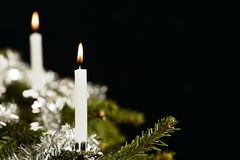 Two candle on Christmas tree Royalty Free Stock Photography