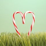 Two candy canes in grass. Stock Images