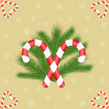 Two candy canes opposite on fir branches and shaped to heart candy canes Stock Photo