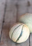Two cantaloupe melons Royalty Free Stock Photography