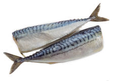 Two carcass salted atlantic mackerel on a light background Royalty Free Stock Photo