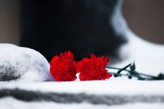Two carnation flower on snow close up Royalty Free Stock Photos