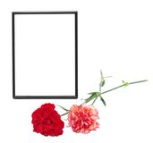 Two carnations and black photo frame Stock Images