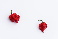 Two Carolina Reaper Hot Chilli Peppers on white Royalty Free Stock Images