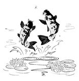 Two carp jump out from water after a dragon-fly. On a white background Stock Images
