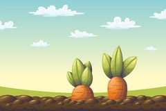 Two Carrots On A Field Royalty Free Stock Image