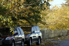 Two Cars under the Trees. In the Parking Lot Stock Photo