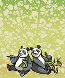 Two cartoon panda and bamboo leaves Royalty Free Stock Photos