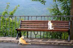 Two cat. S on the bench Stock Image