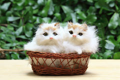 The two cat or kittens in the basket. The two cat or in the basket, as animal background Royalty Free Stock Photos