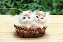 The two cat in the basket. The two cat in the basket, as background or print card Royalty Free Stock Photo