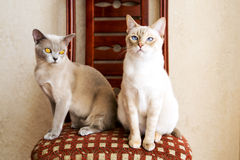 Two cat friends waiting for their owner Stock Photo