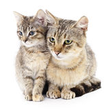 Two cat Stock Images