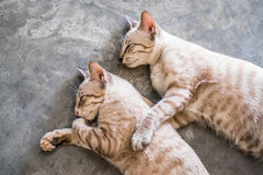 Two cat kitten brethren sleeping hug. Embrace stock photos