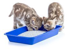 Two cat kittens in toilet tray box with litter isolated. On white Royalty Free Stock Images