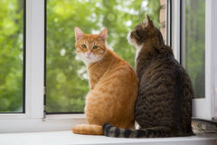 Two cat sitting on the window sill Royalty Free Stock Photos