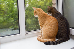 Two cat sitting on the window sill Stock Images