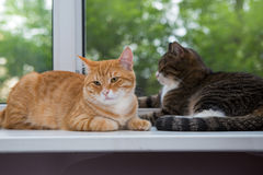Two cat sitting on the window sill Stock Photos