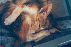 Two cat sleep on pillow Royalty Free Stock Photography