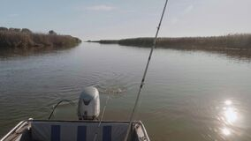 Two catfish are pulled out from water. Fishing rod is over boat. Poaching.