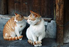 Two cats. Two orange and white cats sitting together Royalty Free Stock Photos