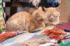 Two cats. Lying on rugs, sleeping stock images