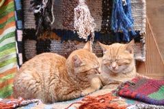 Two cats. Lying on rugs, sleeping stock photography