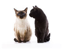 Two Cats. Sitting on a white background Stock Image