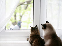 Two cats. Looking  through  the window Stock Photography