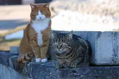 Free Two Cats Stock Photo - 33270080