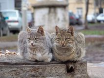 Two Cats. Cat's couple in the street Royalty Free Stock Photos