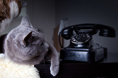 Two cats with antique phone Royalty Free Stock Photo