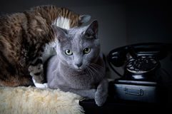 Two cats with antique phone Stock Photography