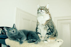 Two cats with antique phone Royalty Free Stock Photography