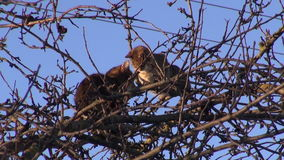 Two cats on apple tree branch. Two domestic cats on apple tree branch stock video