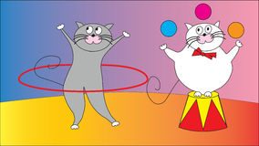 Two cats arrange circus. Stock Photography