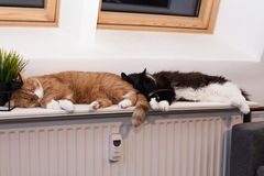 Two cats, auburn and black and white, are sleeping peacefully on a warm battery, huddling together. Friendship of animals. Winter. Two cats, auburn and black and stock images
