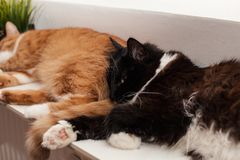Two cats, auburn and black and white, are sleeping peacefully on a warm battery, huddling together. Friendship of animals. Winter. Cat lies on the battery on a stock photography
